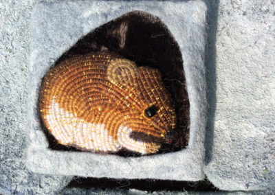 A Vole in the Wall