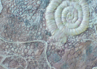 Ammonite Box Detail 4