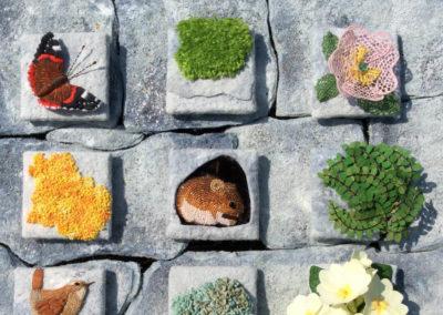 Dry Stone Wall Habitat